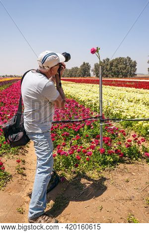 Israel. Elderly photographer with a professional camera and a photo bag photographs a flower field. The field of luxurious large spring buttercups. The concept of botanical and photo tourism