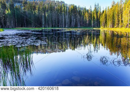 Quiet round lake. The Tioga Road and Pass in Yosemite Park. USA. Majestic coniferous forest are reflected in the smooth water of the lake
