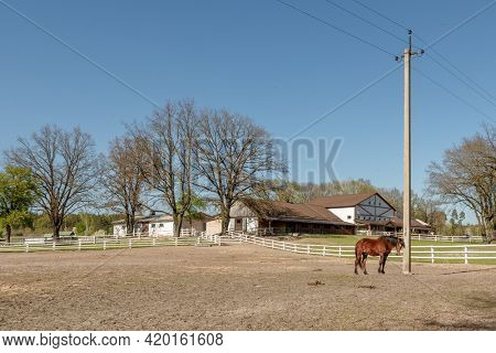 Horses on the Farm. horses grazing in a field with horse barn in the background.