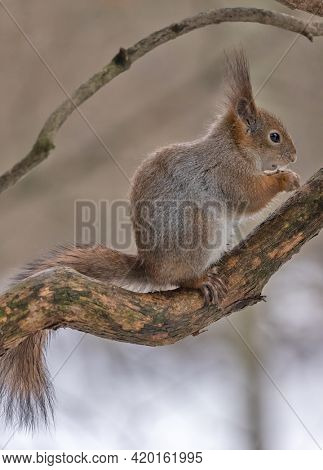 photo with winter squirrel on branch