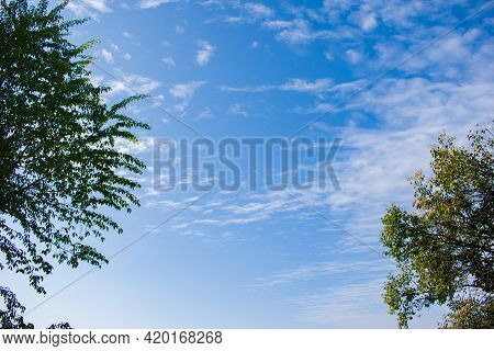 Open Blue Sky With White Clouds And Trees On Side