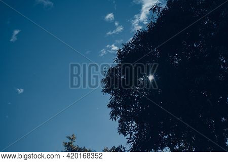 Picture Of Open Blue Sky And Sunlight Penetrating Through Tree Leaves