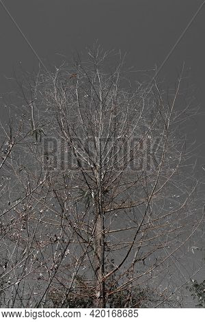 Tree Having No Leaf And Grey Background