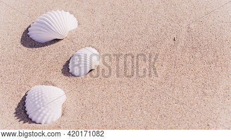 Shell Sea With Seashells, Shells On Sand Tropical Ocean Beach. Copy Space Of Summer Vacation And Bus