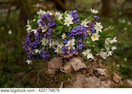 A Bright Bouquet Of Forest Spring Flowers On A Fallen Tree In The Forest.