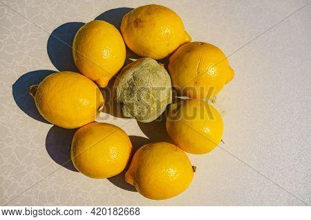 Healthy And Green Moldy Lemon Citrus Fruits. Rotten Fungi Food.