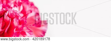 Floral Background With Pink Carnation Flower In Soft Focus.