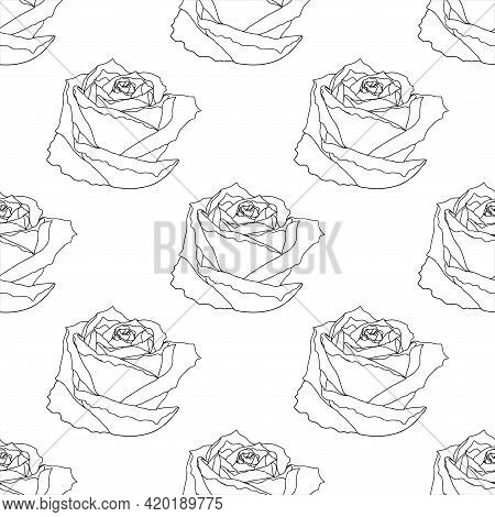 Vector Seamless Pattern With Flower On The White Background