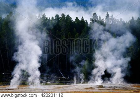 Steam rising from hot springs and geysers in Yellowstone National Park with pine forest in background