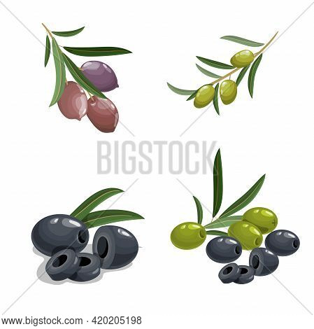 Fresh Green And Black Olives In Cartoon Style. Olives On Branch, With Leaves. Black And Green Pitted
