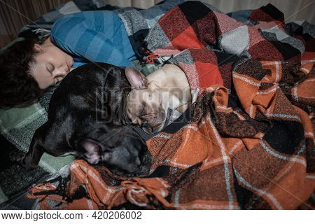 Female And Couple Cute French Bulldog Dogs Sleeping On Bed With Plaid At Home
