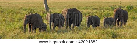 Elephants In A Line