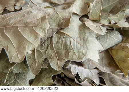 Dry Oak Leaves From A Bath Broom Close-up. Background Image