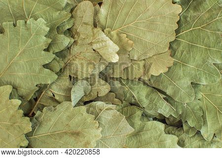 Dry Oak Leaves On A Russian Bath Broom Close-up. Background Image