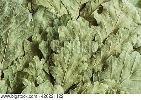 Dry Pale Green Oak Leaves From A Bath Broom. Background Image