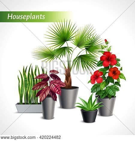 Colored Houseplants Realistic Composition With Green Flora In Flowerpots On White Background Vector