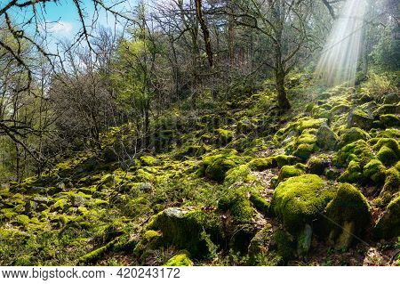 Enchanted Forest Of Large Stones Covered With Moss And Rays Of Sunlight Entering Between The Trees.