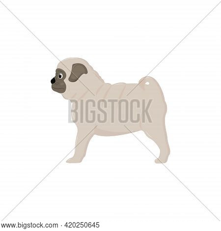 Cute Pug Puppy Stands And Looks Into The Distance. Vector Illustration Isolated On A White Backgroun