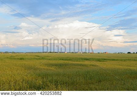 Summer Evening Landscape With A Green Wheat Field And A Rural Settlement On The Horizon