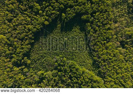 Summer In Forest Aerial Top View. Mixed Forest, Summer Colors Countryside Woodland. 4k Aerial Of Dro