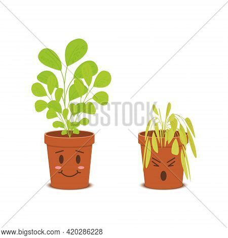 Cute Plants In Pots Characters. Happy Blossom Vs Sad Wilted Flowers Isolated On White Background. Ve