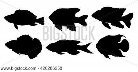 Vector Set Of Silhouettes Of Black Fish Of Different Shapes, Drawn By Hand. Isolated Marine And Rive