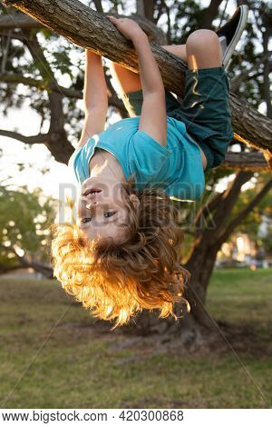 Child Hanging Upside Down On Tree. Little Boy Child On A Tree Branch. Kid Climbs A Tree.