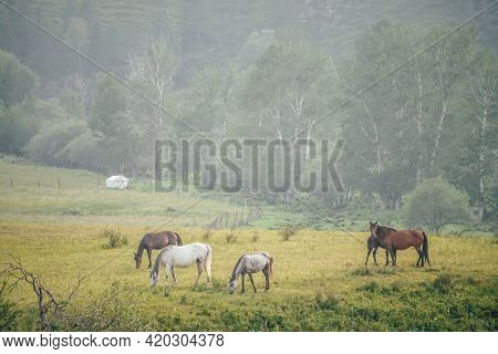 Beautiful horses graze in countryside among trees on background of mountain with forest. Wonderful mountain landscape with white horses and brown horses on hill. Green scenery of mountain countryside.