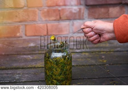 Dandelion Tincture Is A Natural Homeopathic Remedy At Home. Dandelion Infused In Alcohol. Rustic Bac