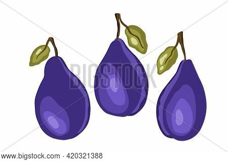 Plum Icon Set Isolated On White Background. Natural Delicious Fresh Ripe Tasty Fruit. Template Vecto