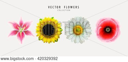 Vector Flowers, Buds Set Isolated On White Background. Lily, Sunflower, Chamomile, Poppy. Realistic