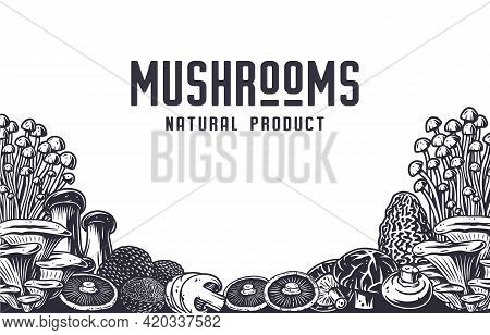 Mushroom Picking. Nature Mushrooms Fungus Or Fungi