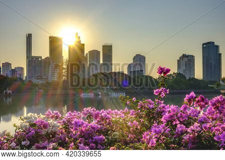 Magenta Bougainvillea Flowers. Cityscape At Sunrise As A Background.