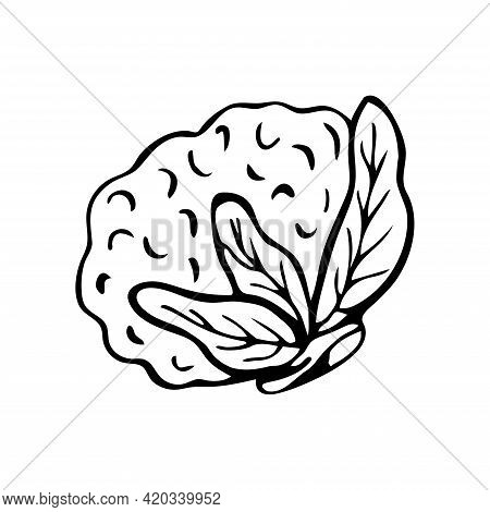 Hand Drawn Cauliflower Isolated On A White Background. Doodle, Simple Outline Illustration. It Can B