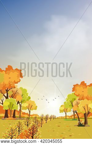 Autumn Landscape Wonderland Forest With Grassland, Mid Autumn With Maples Orange Foliage Trees And L