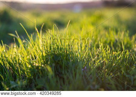 green grass summer background shallow depth of field
