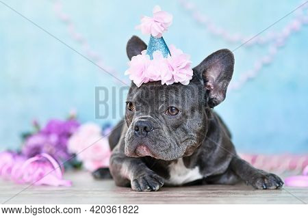 French Bulldog With Birthday Part Hat Lying Down In Front Of Blurry Purple Background With Paper Str