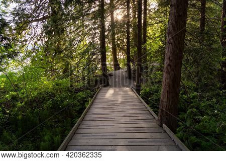 View Of A Path In The Woods With Green Fresh Trees In Shoreline Trail, Port Moody, Greater Vancouver