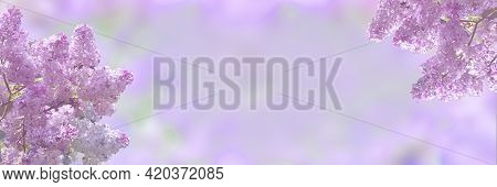 Spring Blossom Lilac Flowers On Soft Pastel Background. Delicate Floral Romantic Image - Beauty Of N