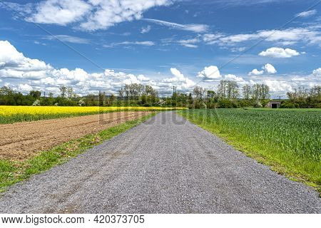 Rapeseed And Grain Are Ripening In The Field, There Is A Dirt Road In The Middle Of The Field, Blue