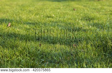 Beautiful View Of Front Yard Of Private Garden. Green Grass Lawn. Beautiful Backgrounds.