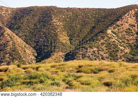 Chaparral Plants And Spring Wildflowers On An Arid Plateau With Barren Mountains Beyond Taken At A C