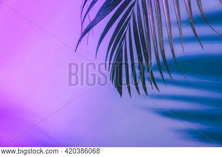 Shadow From Palm Tropical Leaves In Neon Light. Fluorescent , Ultraviolet Color Layout.