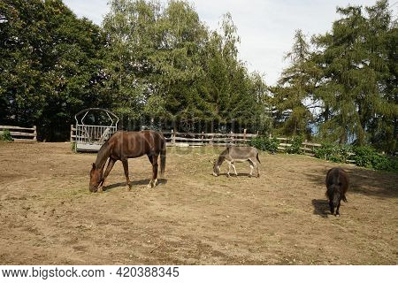 Horse, Donkey And Pony In The Corral Of A Piedmont Farm, Italy
