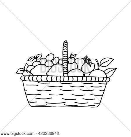 A Basket Filled To The Brim With Citrus Fruits: Lemons, Oranges, Tangerines, Limes. Vector Outline I
