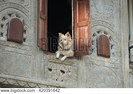 Protective Watch Dog Looking Through His Open First Floor Window. Cute Dog Waits And Waits For His F