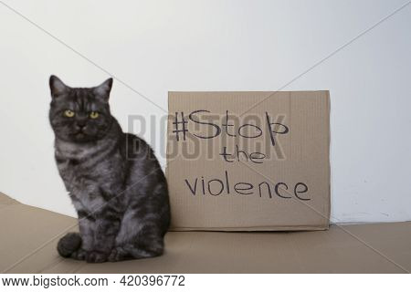 The Cat Asks To Stop The Violence Against Animals. Cardboard Sign With The Words Stop Violence. Anim