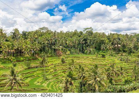 Beautiful Rice Terraces Of Tegallalang, Bali, Indonesia. Wonderful Green Landscape.