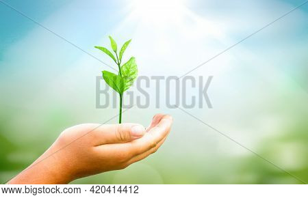 World Environment Day Concept: Hands Holding  Plant Over Green Background