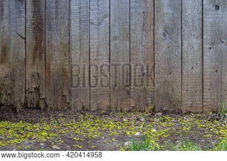 Gray Dry Wooden Planks Wall Suface Background With Ground Surface Underneath
